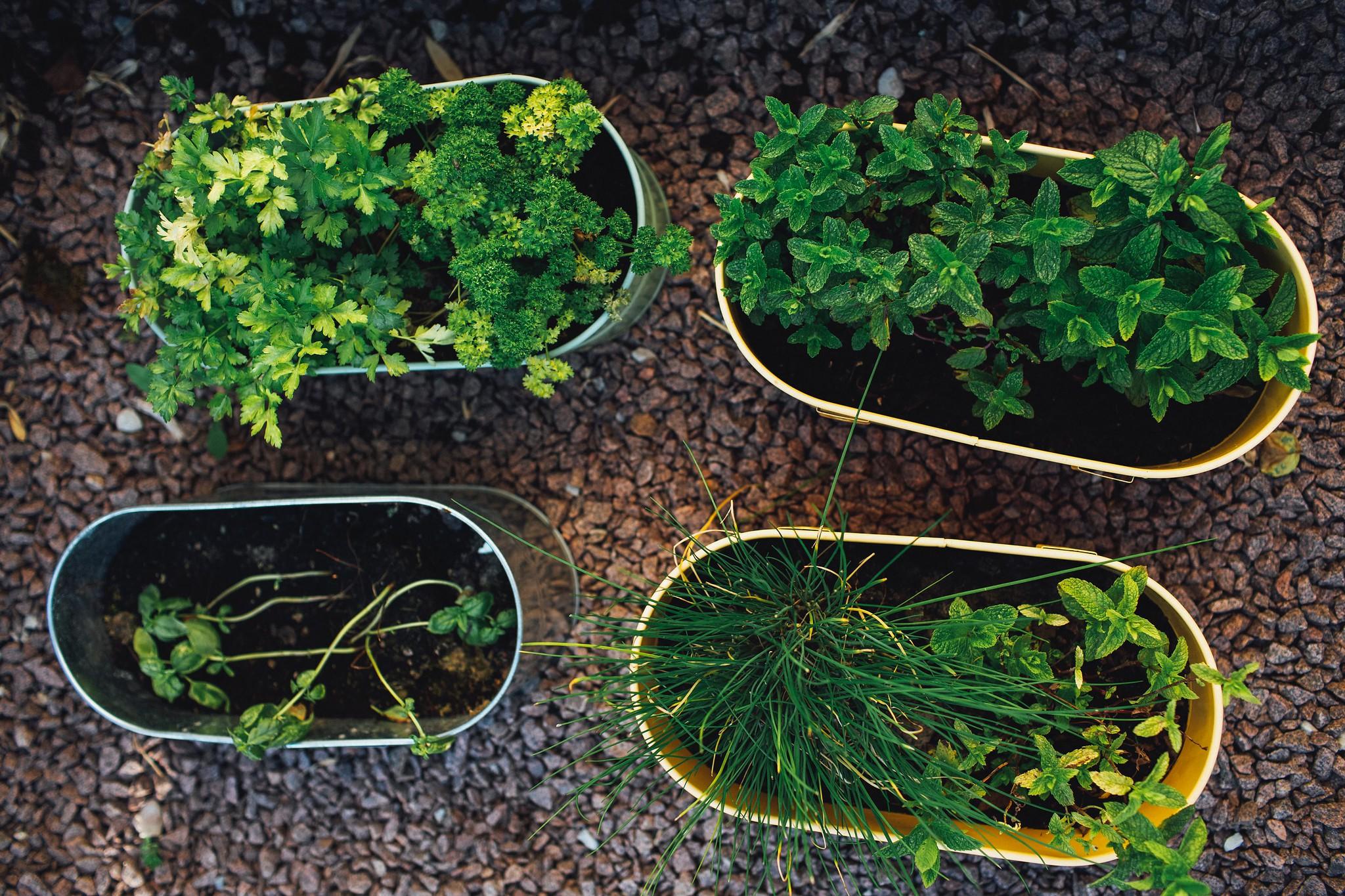 Garden Foraged Frittata – TYOH Day 11, June 2021