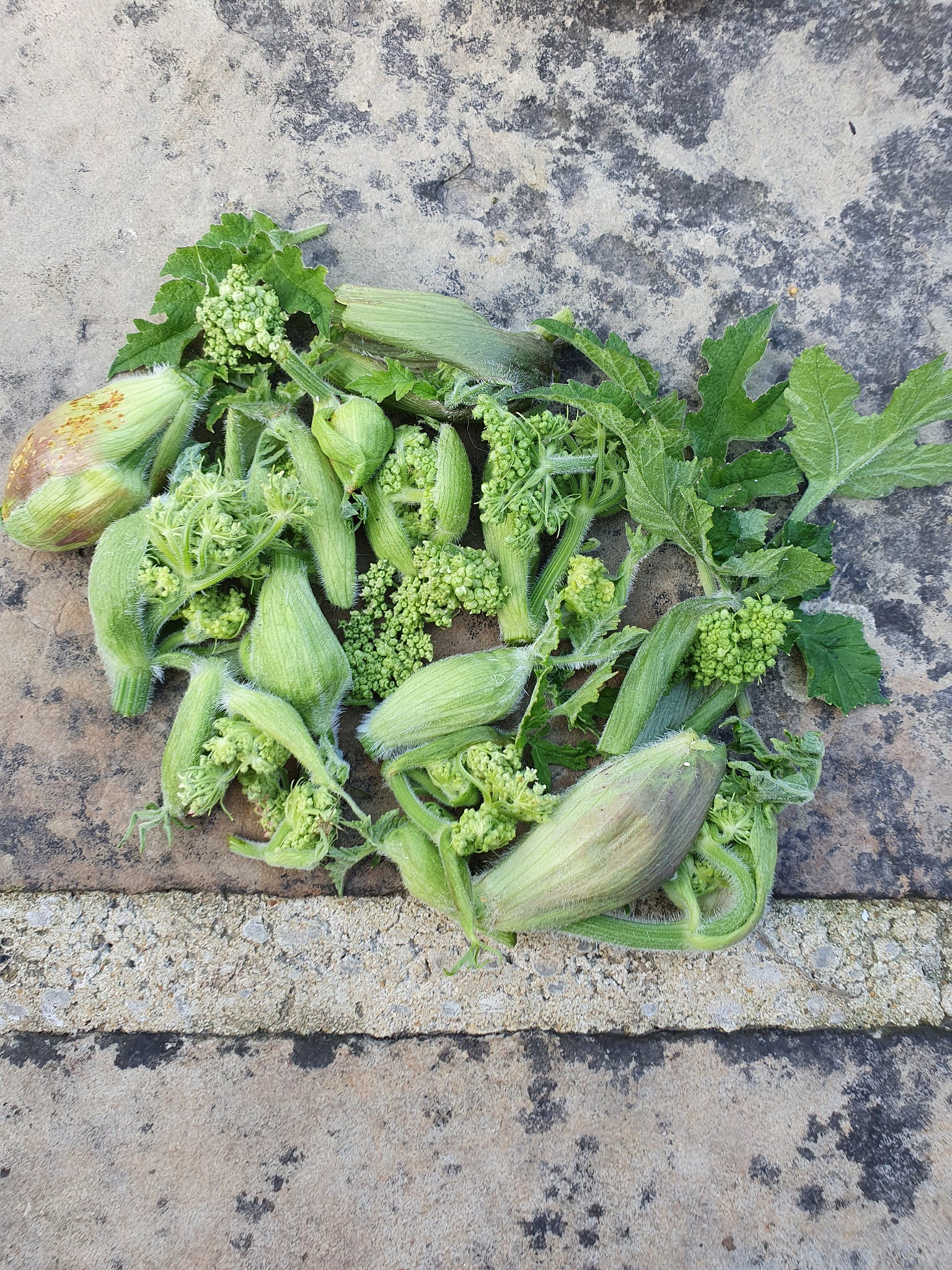Day 53: Foraging for Common Hogweed Florets (TYOH, July 2021)