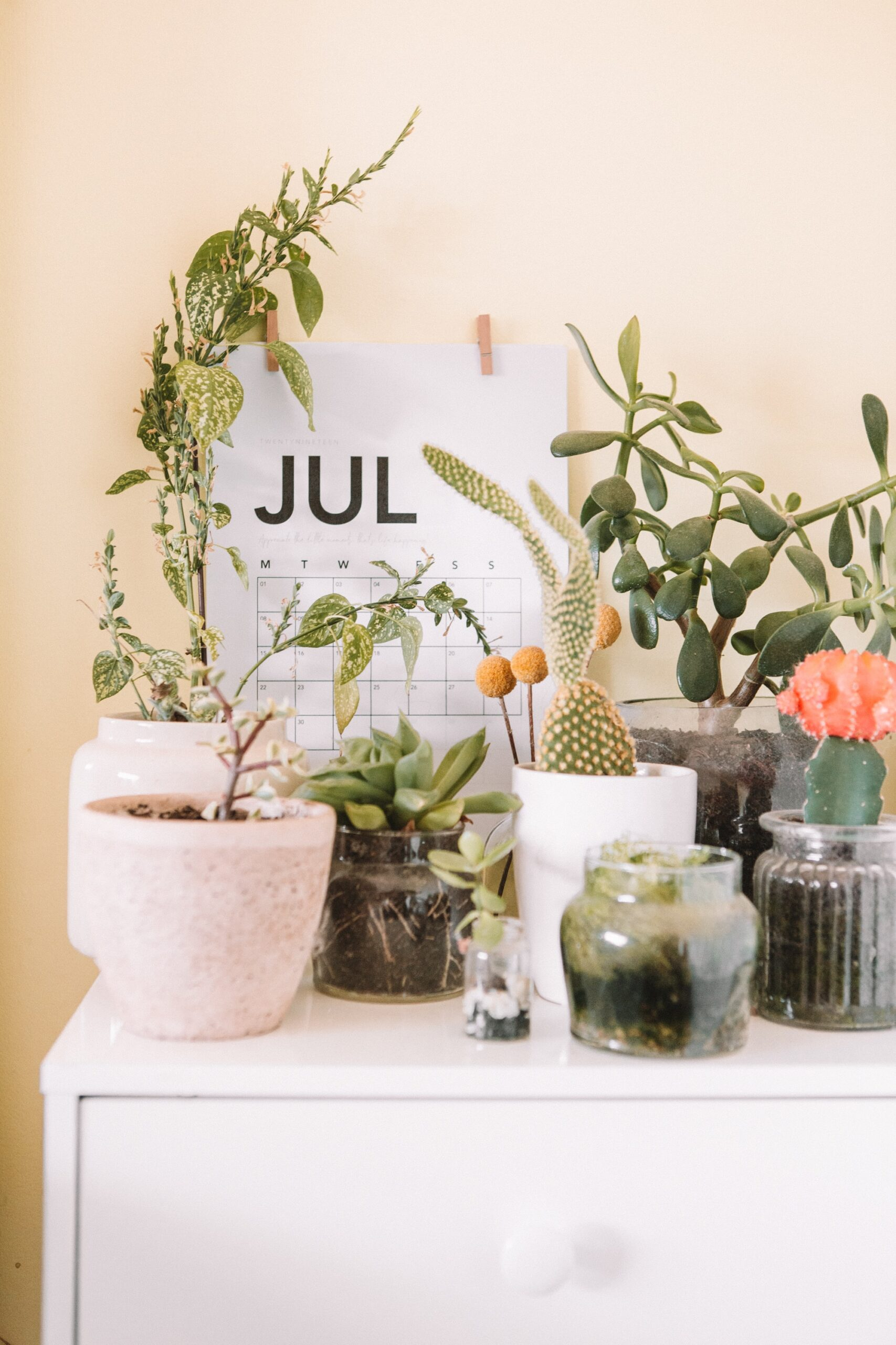 Day 61 (31st July) Reflections on July– The Year of Health
